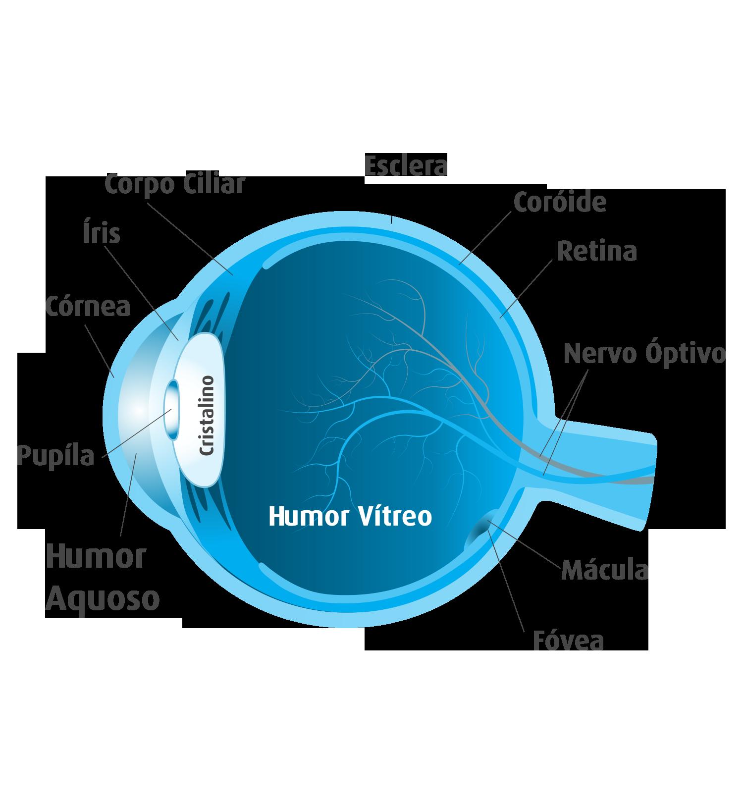 A importância da Visão